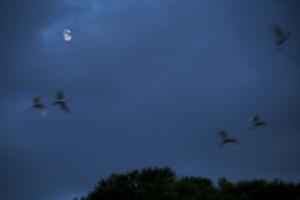 garcillas y luna llena1 blog