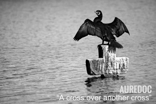 Cormorán grande (Phalacrocoras carbo) extiende sus alas sobre una cruz
