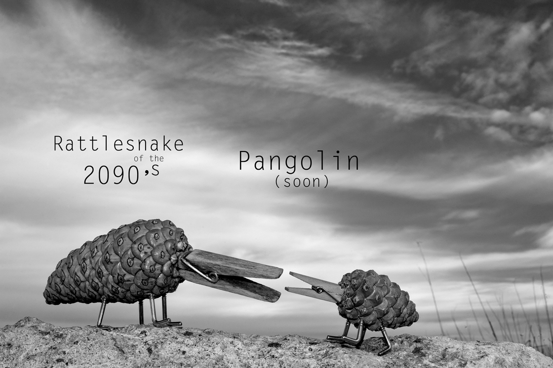 Pangolin (soon)